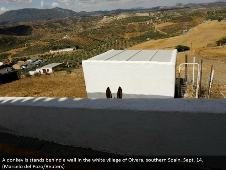 A jackass is stands behind a divider in the white town of Olvera, southern Spain, Sept. 14. (Marcelo del Pozo/Reuters)