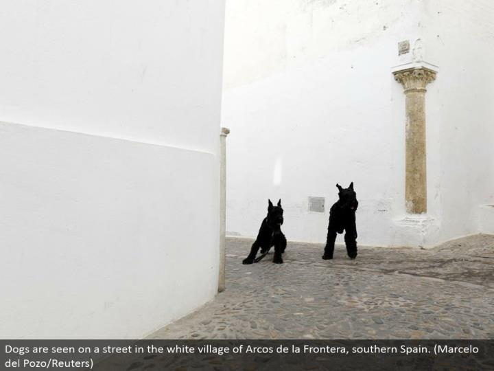 Dogs are seen on a road in the white town of Arcos de la Frontera, southern Spain. (Marcelo del Pozo/Reuters)