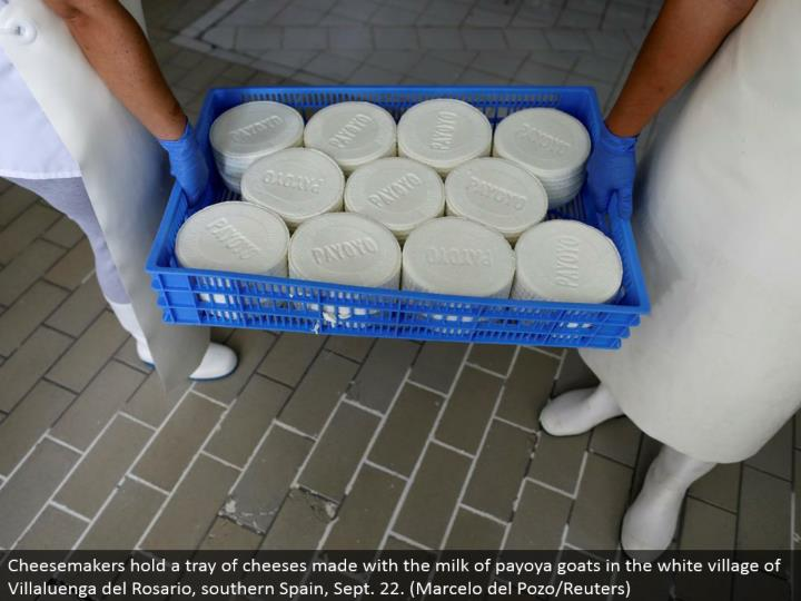 Cheesemakers hold a plate of cheeses made with the drain of payoya goats in the white town of Villaluenga del Rosario, southern Spain, Sept. 22. (Marcelo del Pozo/Reuters)