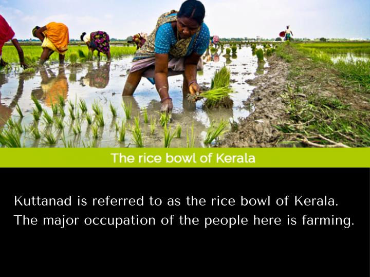 Kuttanad is referred to as the rice bowl of Kerala.