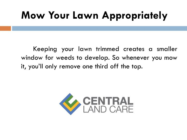 Mow Your Lawn Appropriately