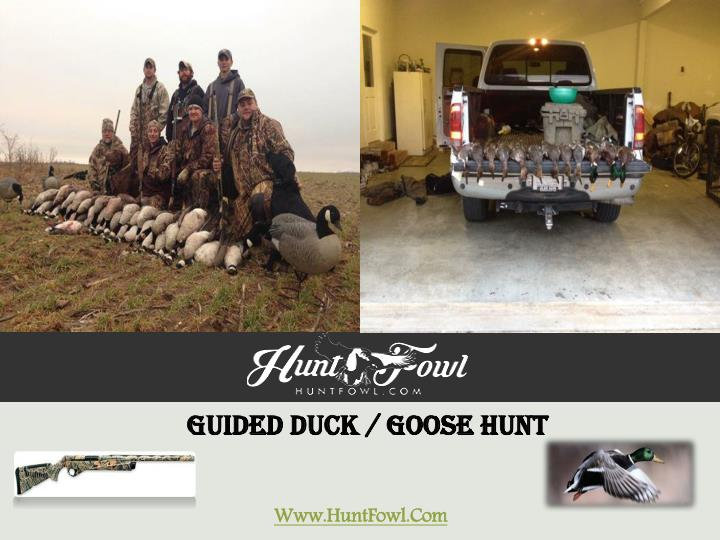 Guided duck goose hunt www huntfowl com