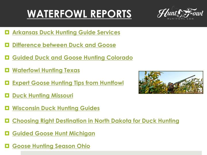 WATERFOWL REPORTS
