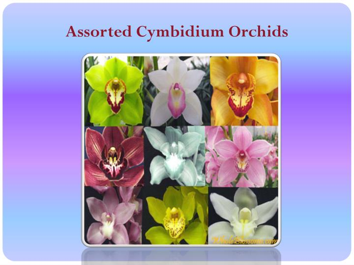 Assorted Cymbidium Orchids