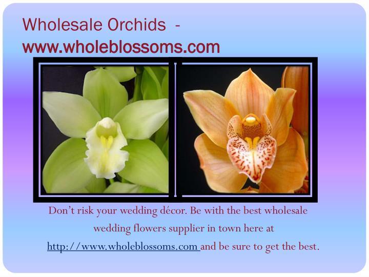 Wholesale Orchids