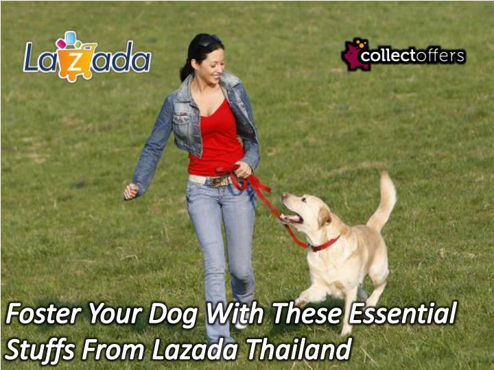 Foster Your Dog With These Essential