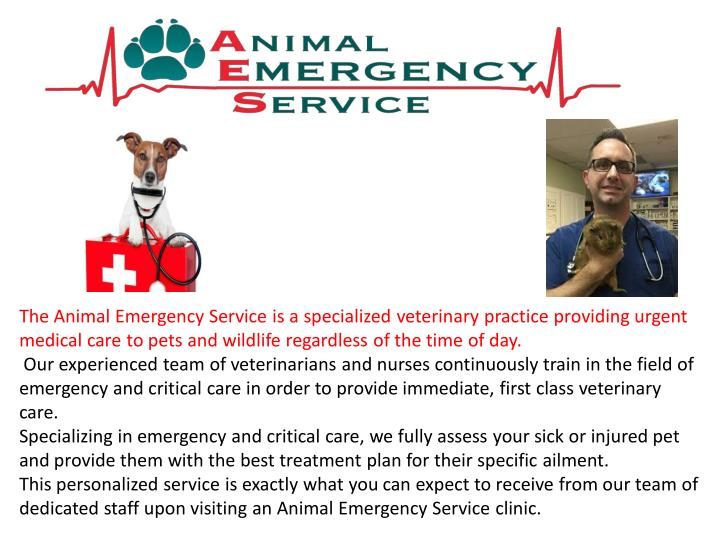 The Animal Emergency Service is a specialized veterinary practice providing urgent