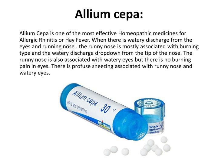 Allium cepa: