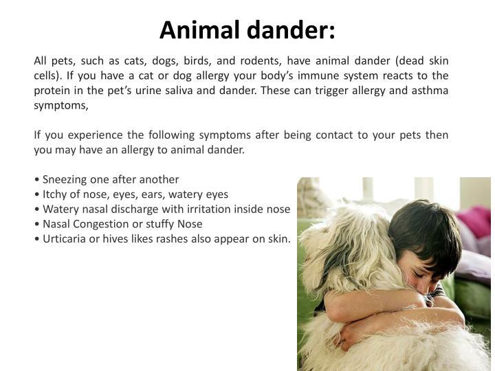 Animal dander: