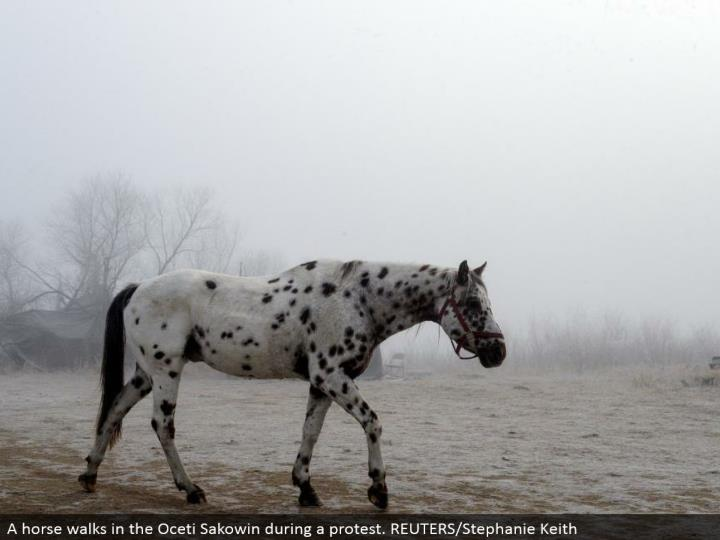 A horse strolls in the Oceti Sakowin amid a dissent. REUTERS/Stephanie Keith
