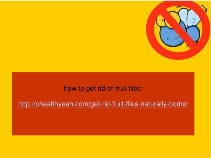 how to get rid of fruit flies: