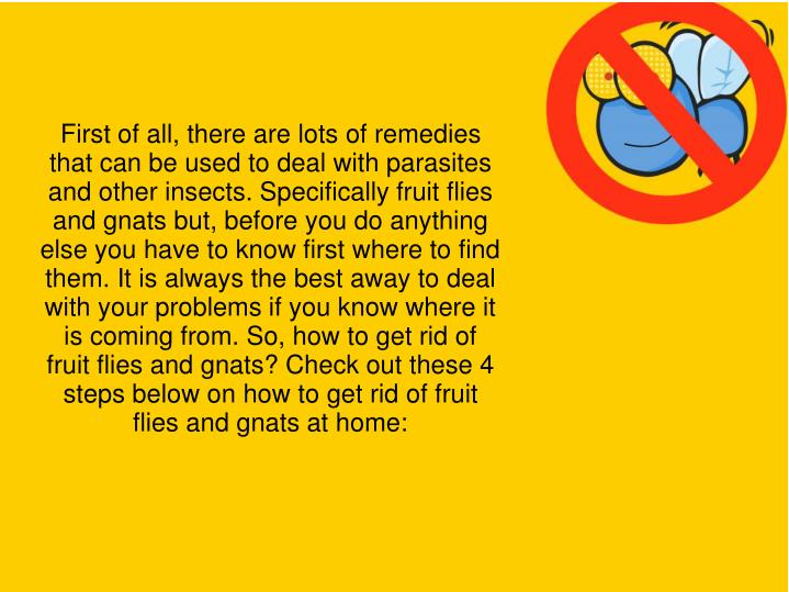 First of all, there are lots of remedies that can be used to deal with parasites and other insects. Specifically fruit flies and gnats but, before you do anything else you have to know first where to find them. It is always the best away to deal with your problems if you know where it is coming from. So, how to get rid of fruit flies and gnats? Check out these 4 steps below on how to get rid of fruit flies and gnats at home: