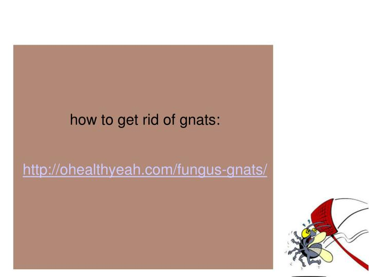 how to get rid of gnats: