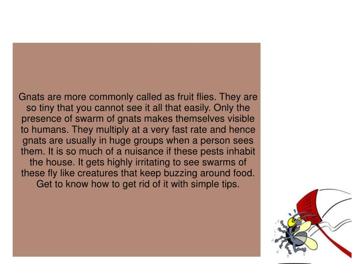 Gnats are more commonly called as fruit flies. They are so tiny that you cannot see it all that easi...