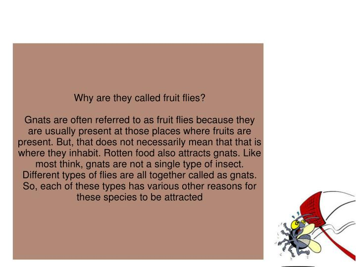 Why are they called fruit flies?
