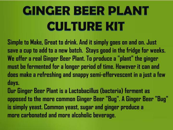 GINGER BEER PLANT CULTURE KIT