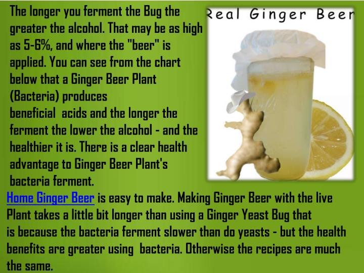 "The longer you ferment the Bug the greater the alcohol. That may be as high as 5-6%, and where the ""beer"" is applied. You can see from the chart below that a Ginger Beer Plant (Bacteria) produces beneficial  acids and the longer the ferment the lower the alcohol - and the healthier it is."