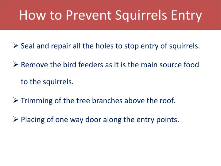 How to Prevent Squirrels Entry