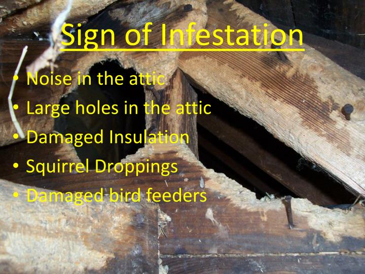 Sign of Infestation