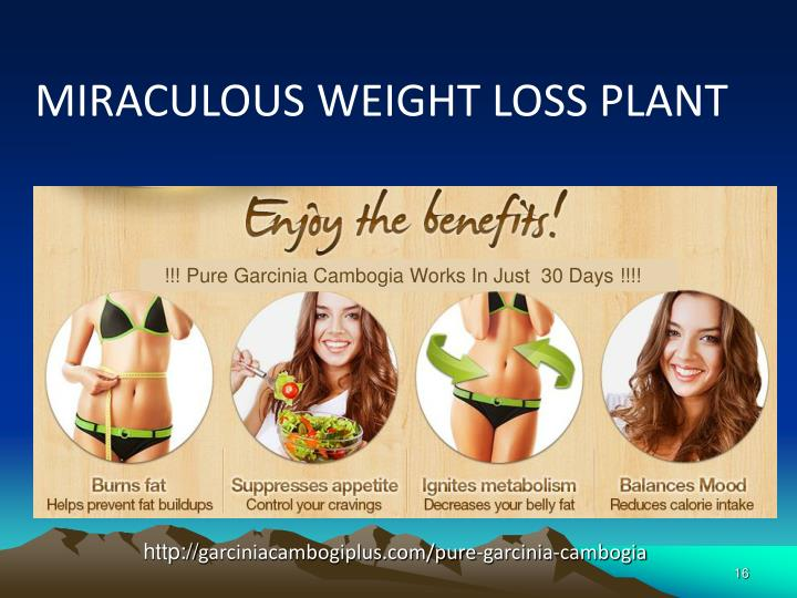 MIRACULOUS WEIGHT LOSS PLANT