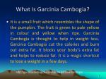 what is garcinia cambogia
