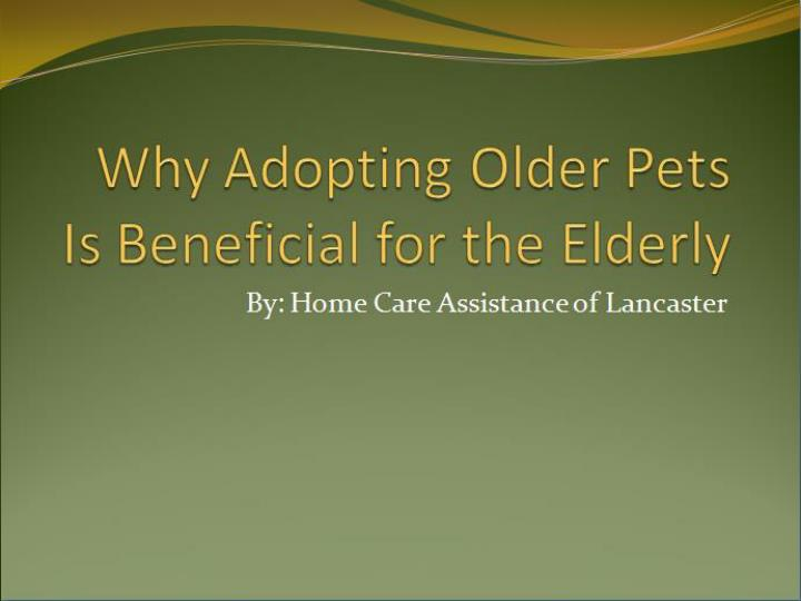 Why adopting older pets is beneficial for the elderly 7440833