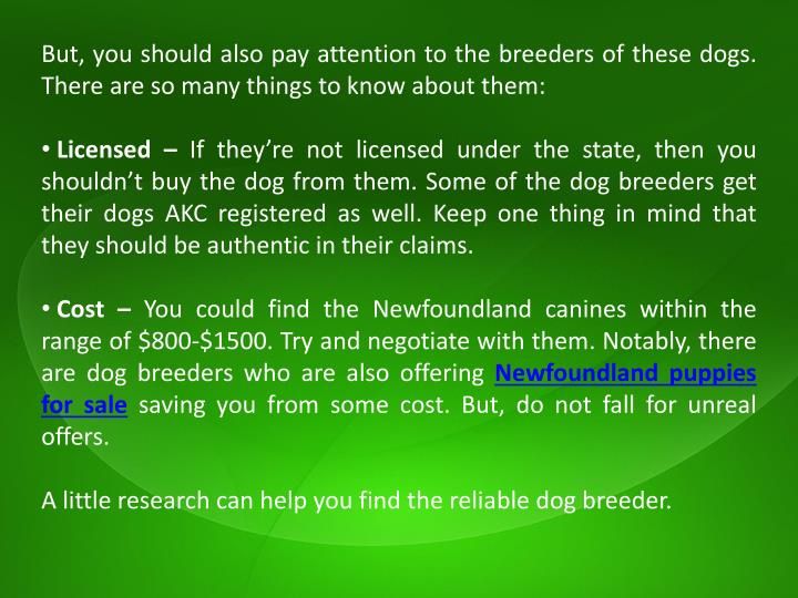 But, you should also pay attention to the breeders of these dogs. There are so many things to know about them: