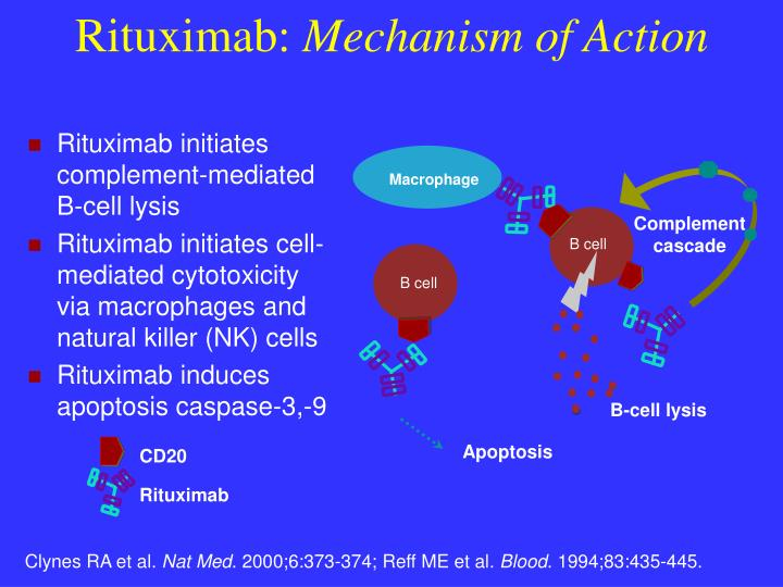 Rituximab initiates complement-mediated