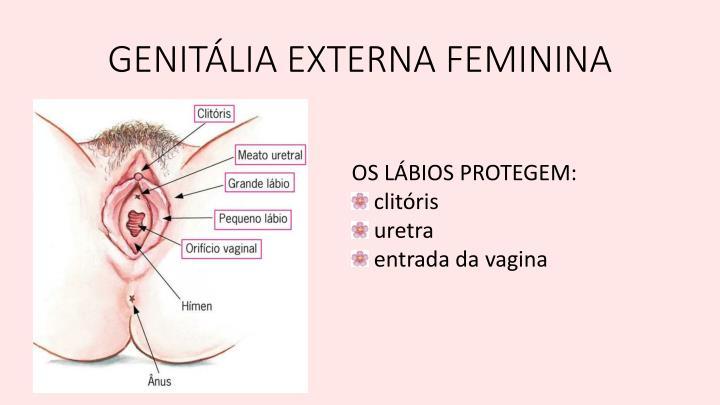 GENITÁLIA EXTERNA FEMININA