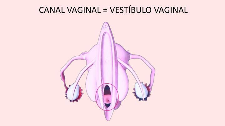 CANAL VAGINAL = VESTÍBULO VAGINAL