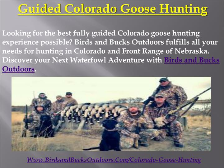 Guided Colorado Goose Hunting