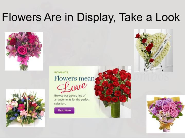 Flowers Are in Display, Take a Look