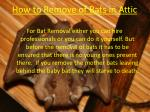 how to remove of bats in attic