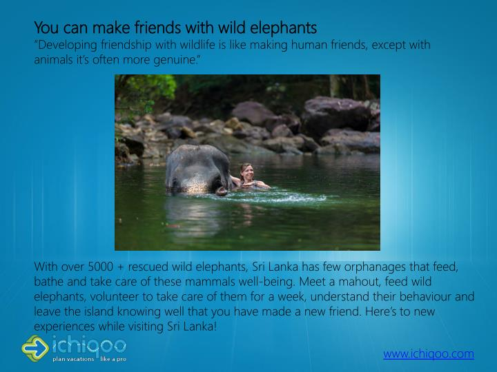You can make friends with wild elephants
