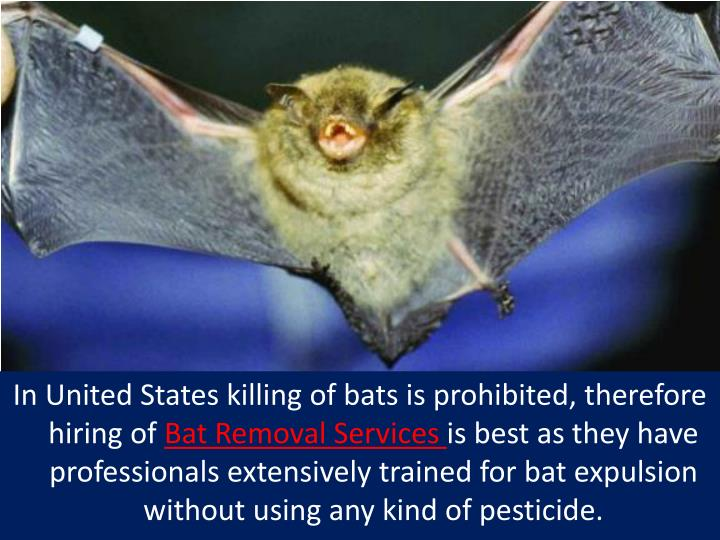 In United States killing of bats is prohibited, therefore hiring of