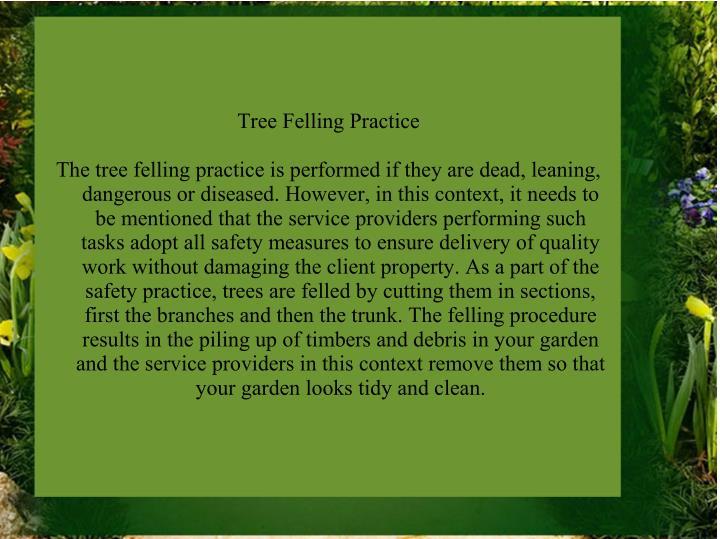 Tree Felling Practice
