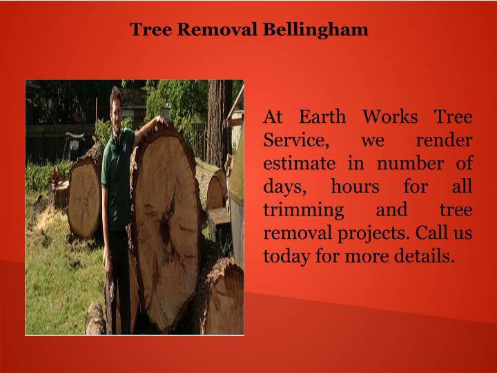 Tree Removal Bellingham