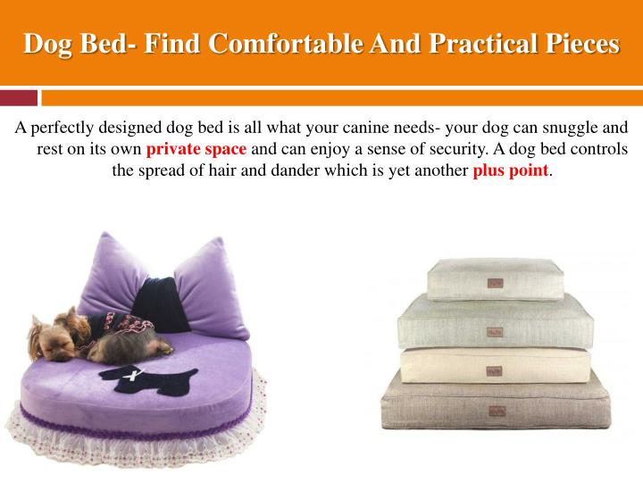 Dog bed find comfortable and practical pieces