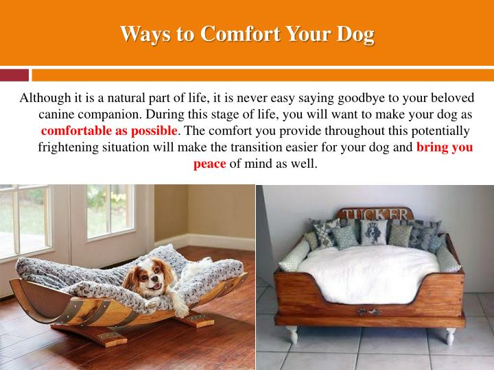 Ways to Comfort Your Dog