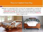 ways to comfort your dog