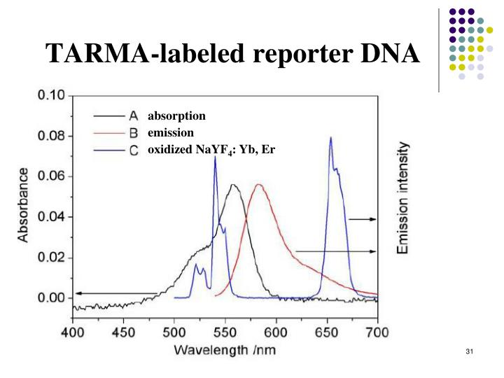 TARMA-labeled reporter DNA