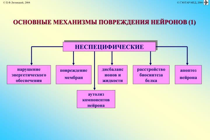 ОСНОВНЫЕ МЕХАНИЗМЫ ПОВРЕЖДЕНИЯ НЕЙРОНОВ
