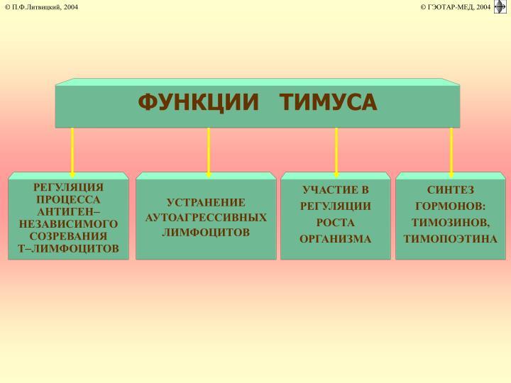 ФУНКЦИИ   ТИМУСА