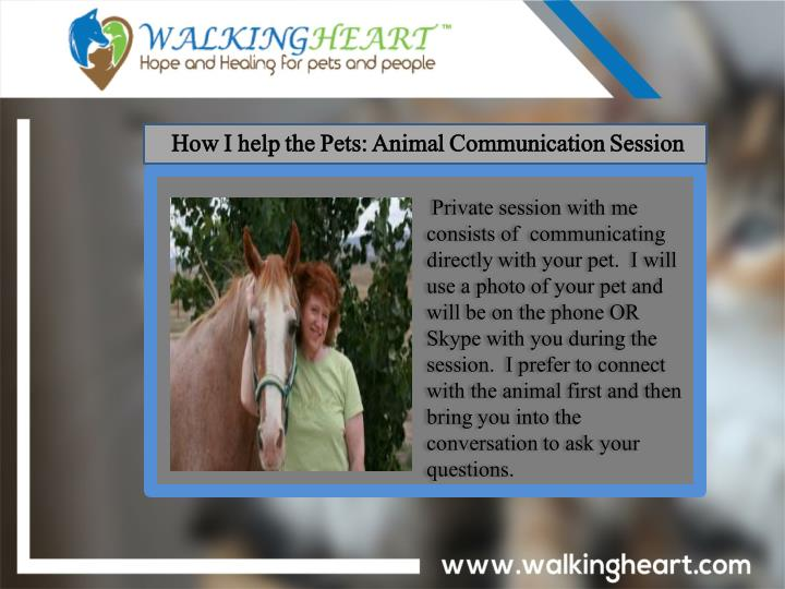 How I help the Pets: Animal Communication Session