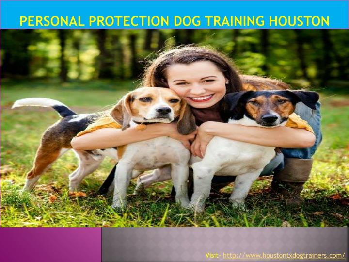 Personal protection dog training houston