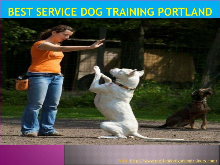 best service dog training portland