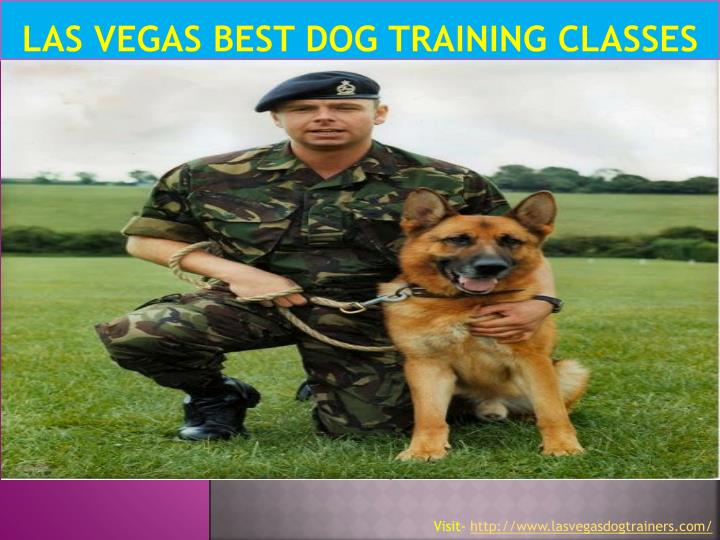 Las vegas best dog training classes