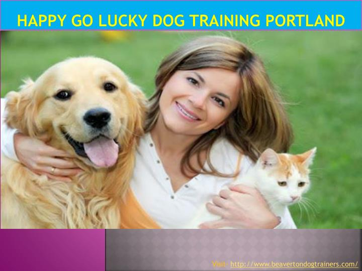 Happy go lucky dog training portland