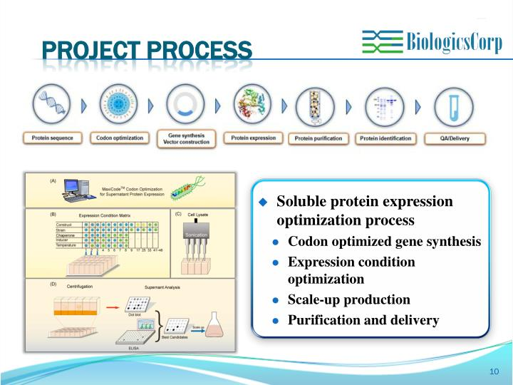 PROJECT PROCESS