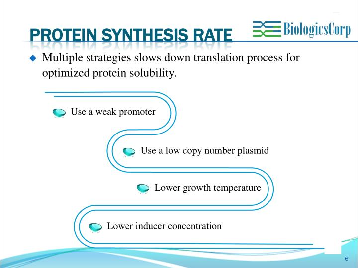 PROTEIN SYNTHESIS RATE